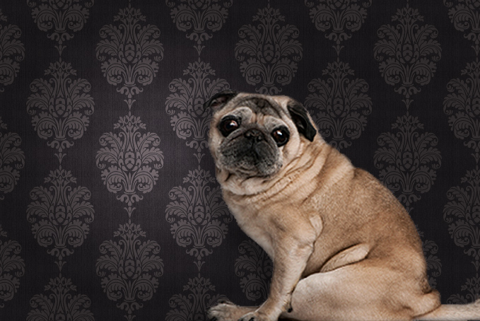 Pug against a brown pattern wallpaper background