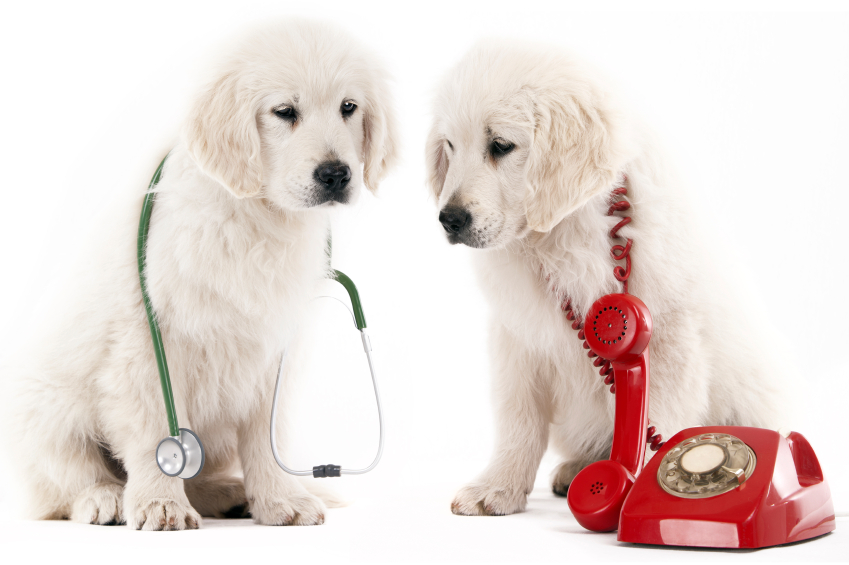 Dog with a stethoscope and another dog with a telephone and cord wrapped around it