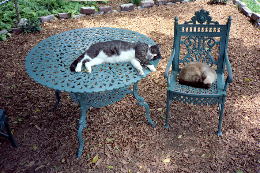 Cats lying on outdoor furniture