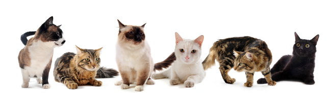 Cats against a white background