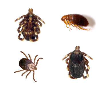 Different types of ticks