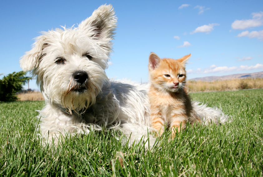 Dog and cat sitting on grass