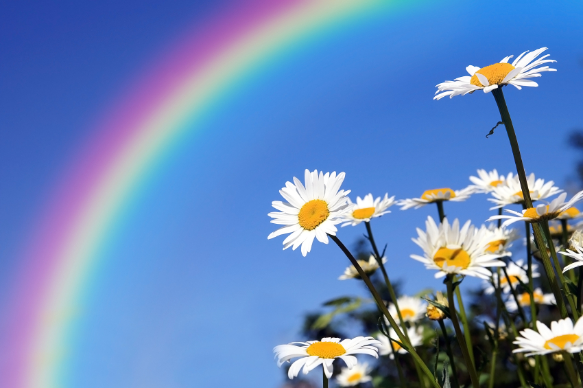 Flowers and a rainbow in the background