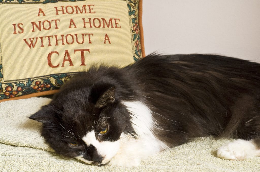 Cat lying in front of a pillow with the text A Home is not a Home without a cat