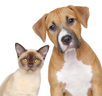 Cat and dog against a white background