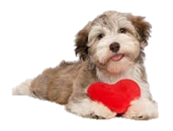 Dog with a heart-shaped object