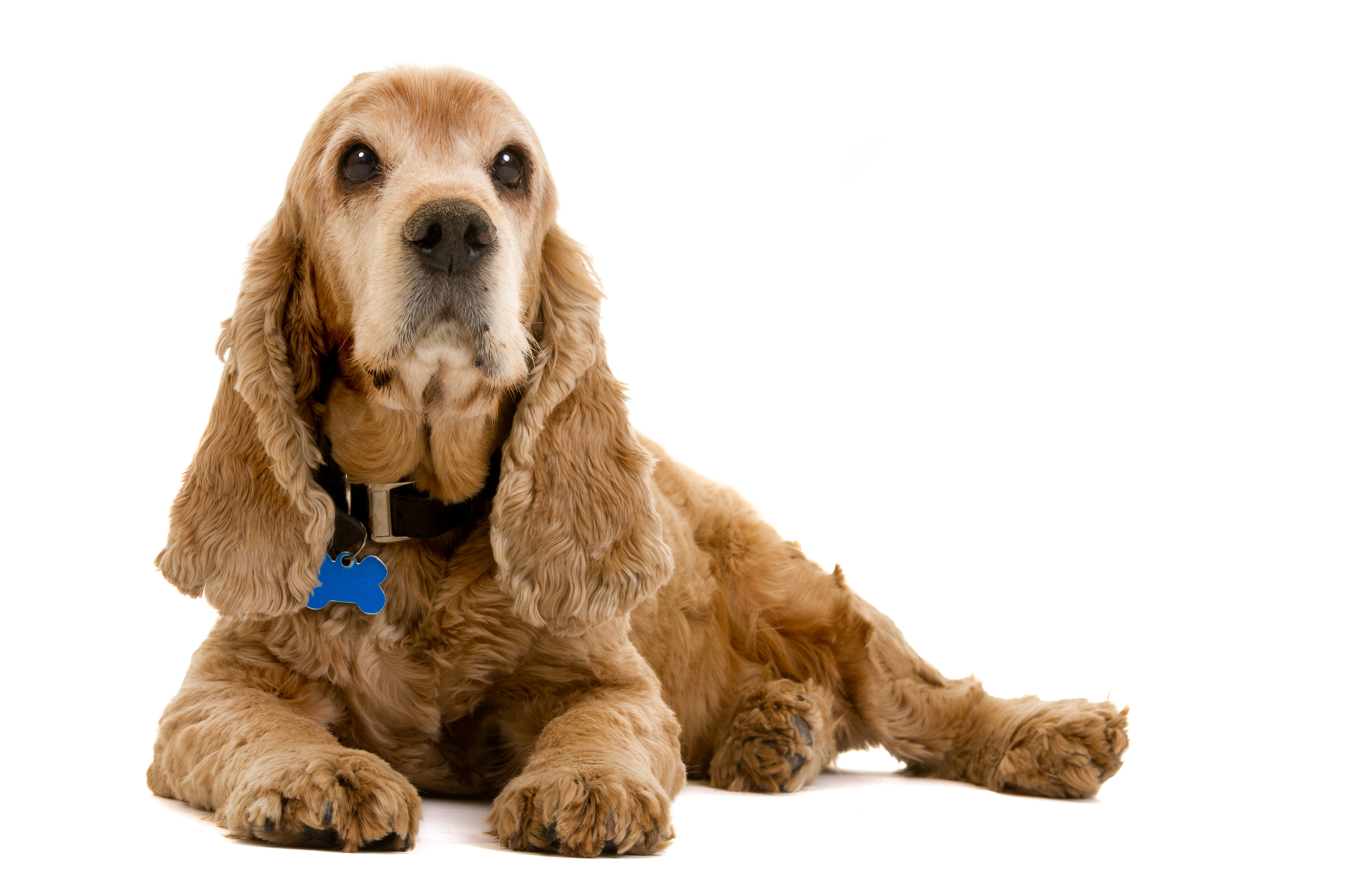 Thyroid Testing In Cats And Dogs