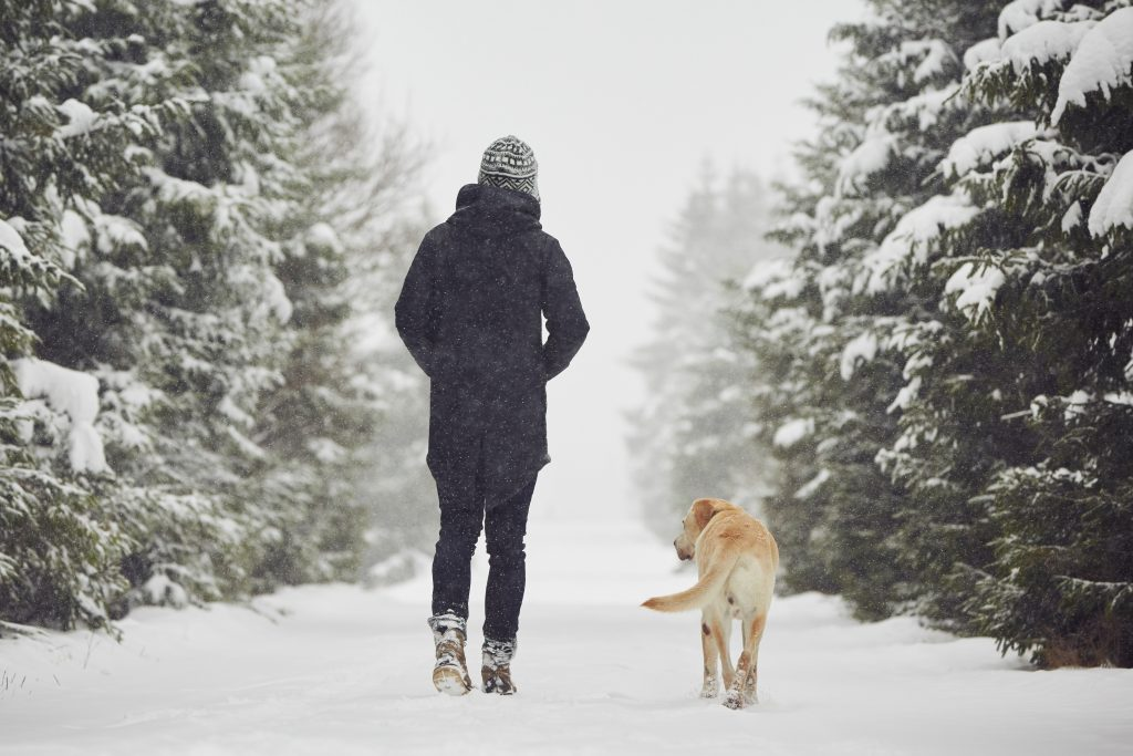 winter dog walks