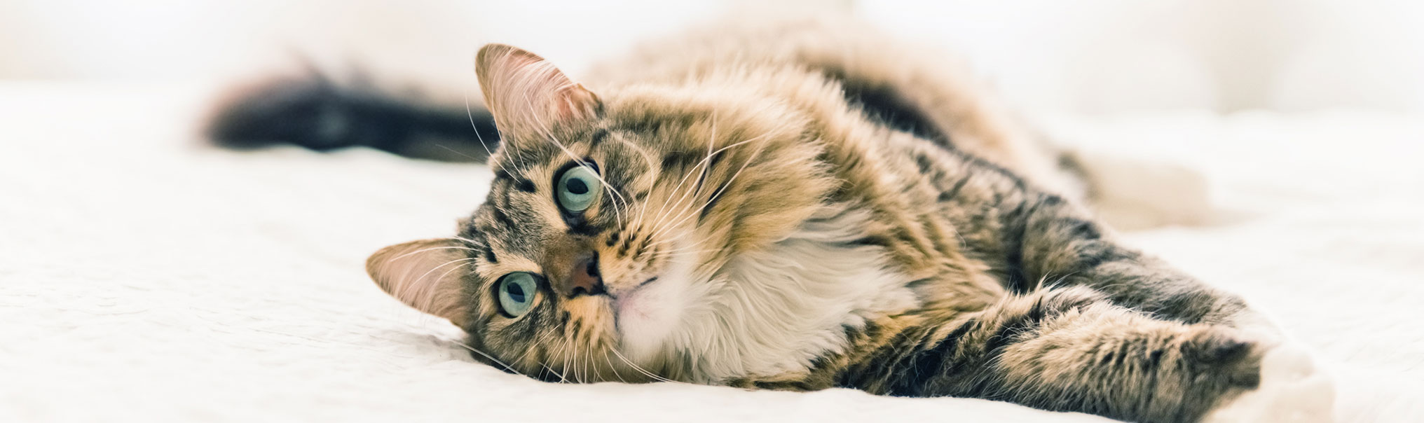 will ferrell cats