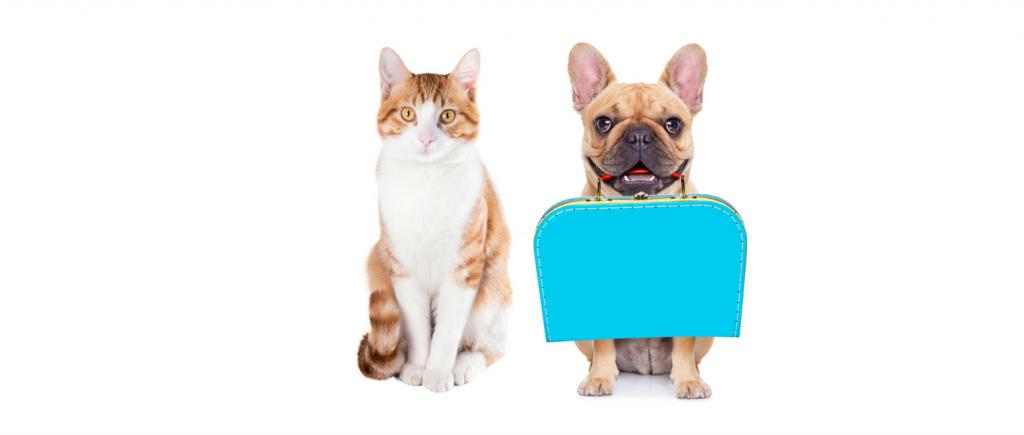 cat-dog-boarding