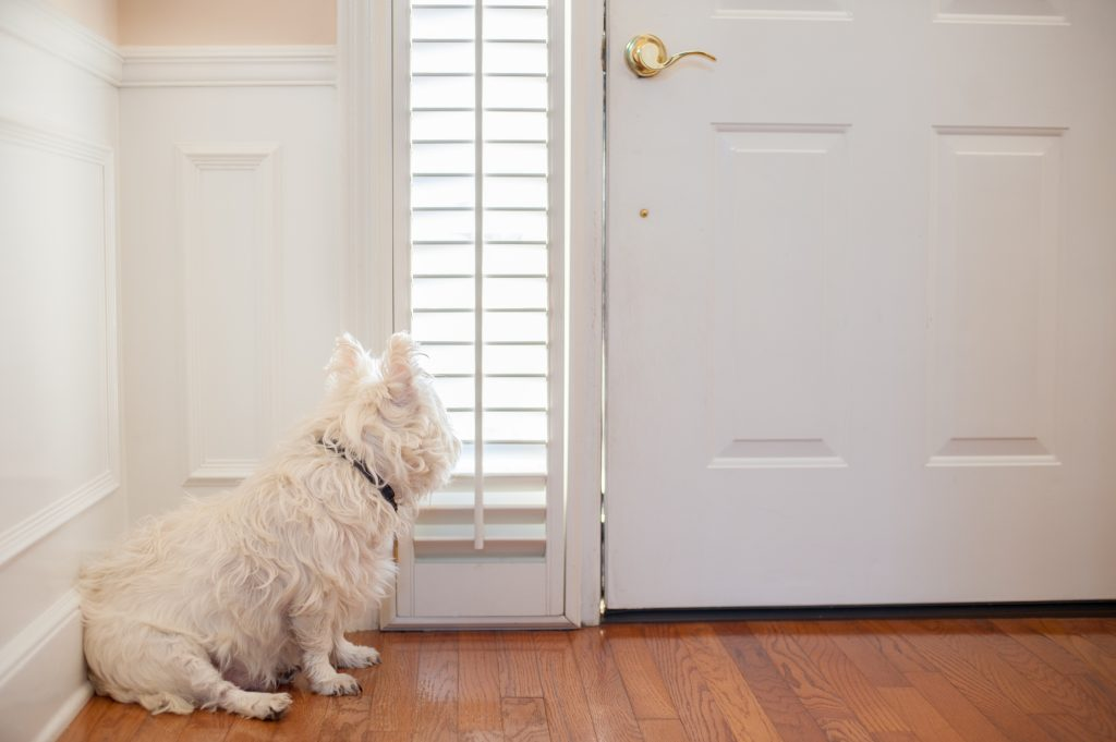dog-barks-at-door-bell