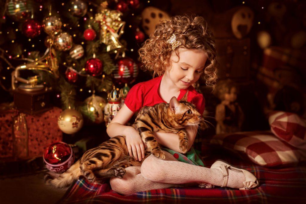 holiday-gift-kitten