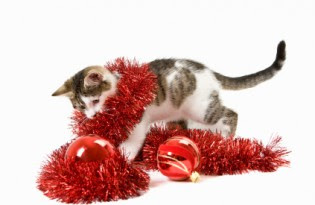 holiday-cat