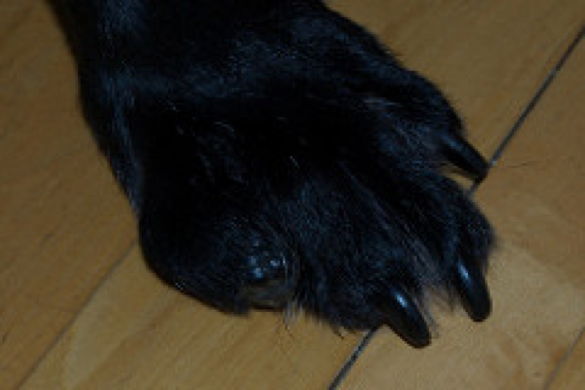 paw-blog