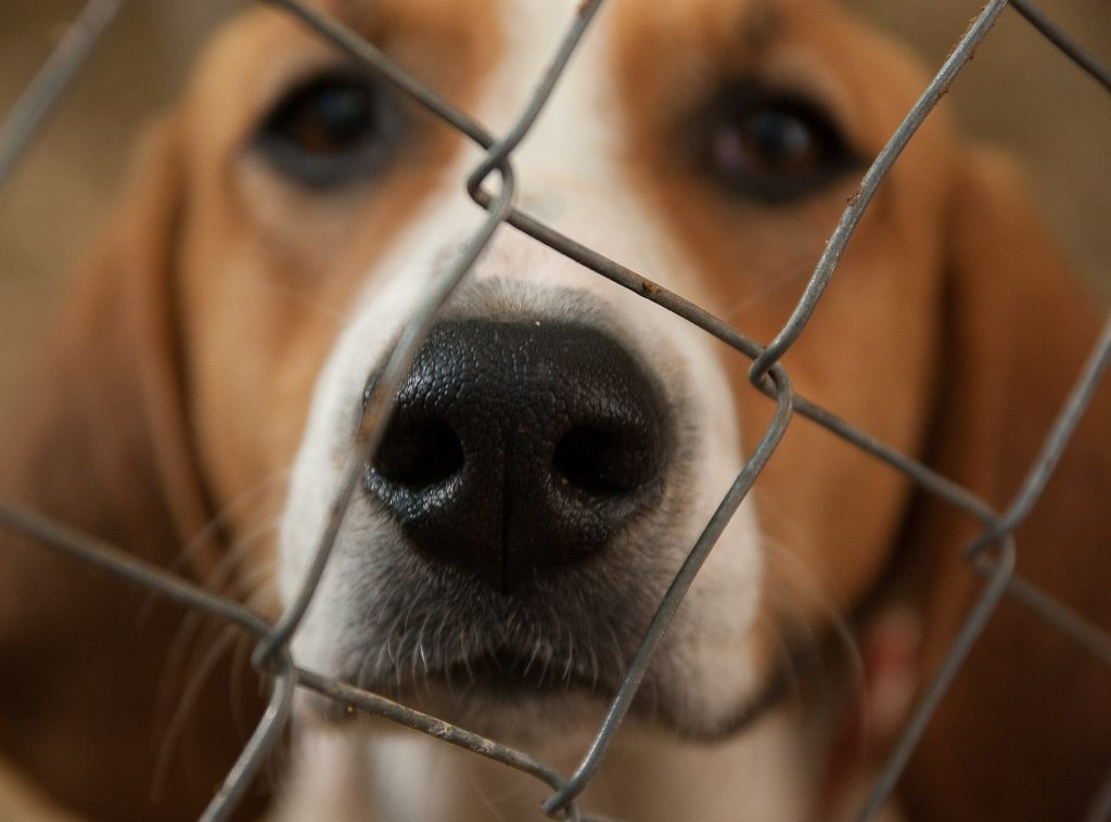 Dog at the kennel