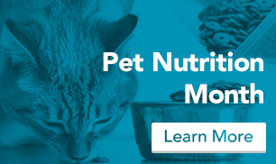 blog_nutrition_cat