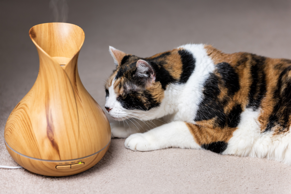 Cat smelling an essential oil diffuser