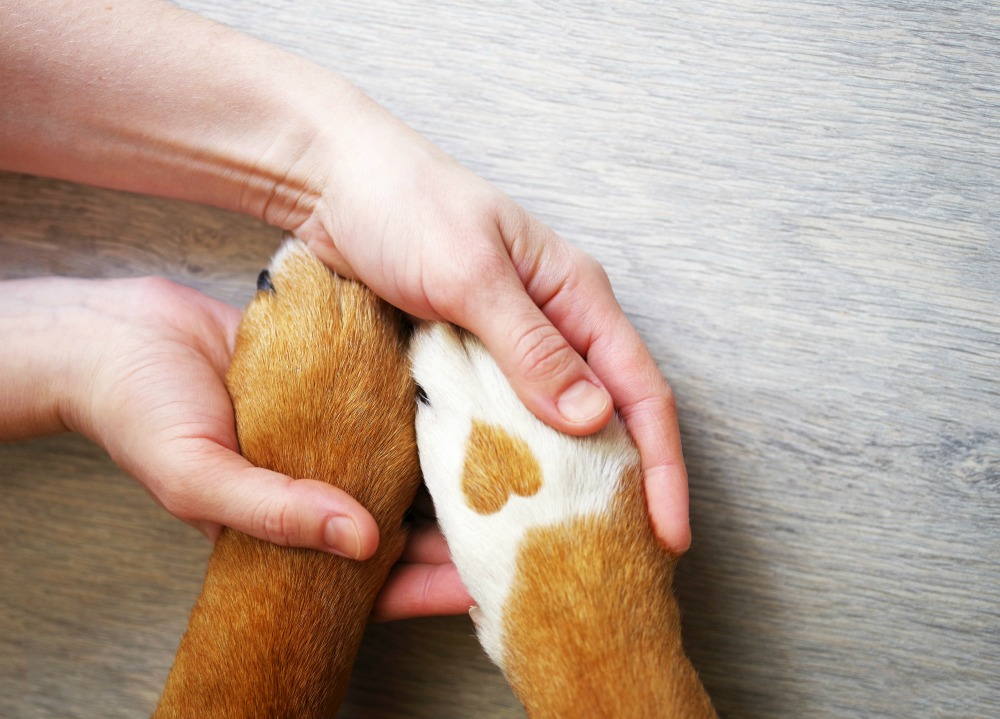 Human holding dog paws